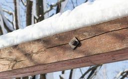 Neve su legno Fotografia Stock