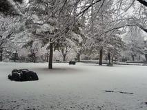 Neve su terra in parco Fotografia Stock Libera da Diritti