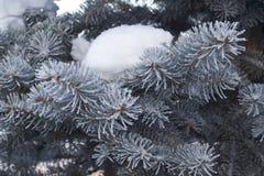 Neve su un abete rosso blu Immagini Stock Libere da Diritti