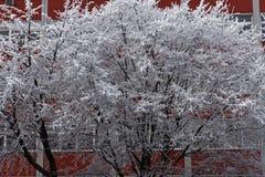 Neve su un albero Fotografia Stock