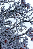 Neve su un albero Fotografia Stock Libera da Diritti