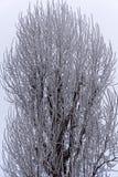 Neve su un albero Immagini Stock Libere da Diritti