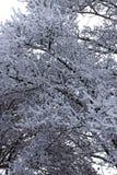 Neve su un albero Immagine Stock