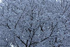 Neve su un albero Immagini Stock