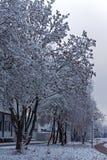 Neve su un albero Fotografie Stock