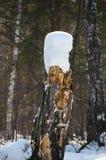 Neve su un ceppo asciutto dell'albero Fotografia Stock Libera da Diritti