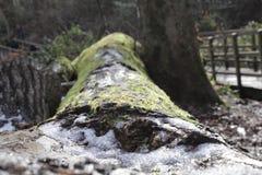Neve su un ceppo muscoso fotografie stock