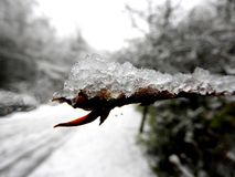 Neve su una filiale Fotografie Stock Libere da Diritti