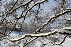 Neve sui rami Fotografia Stock