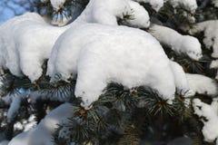 Neve sui rami degli abeti degli alberi Immagini Stock Libere da Diritti