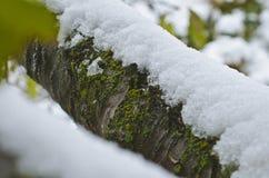 Neve sui tronchi di albero nel legno fotografia stock