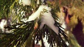 Neve sul pino Immagini Stock Libere da Diritti