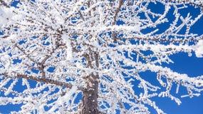 Neve sull'albero Fotografia Stock