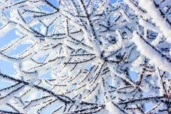 Neve sull'albero Fotografia Stock Libera da Diritti
