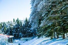 Neve sull'albero Immagini Stock