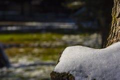 Neve sulla fine dell'albero su Immagini Stock Libere da Diritti