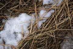 Neve sulla paglia Fotografie Stock Libere da Diritti
