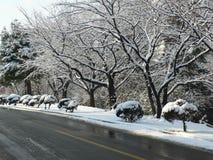 Neve sulle filiali Fotografia Stock Libera da Diritti
