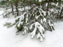 Neve sulle filiali della betulla immagini stock