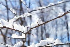 Neve sulle filiali di albero immagine stock libera da diritti