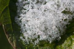 Neve sulle foglie dell'albero Fotografia Stock Libera da Diritti