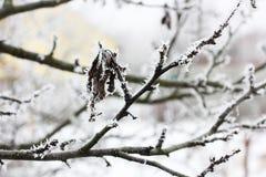 Neve sulle foglie Glassi freddo Inverno neve Fiori immagini stock