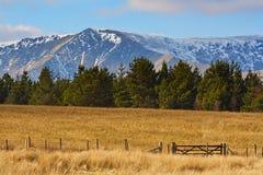 Campos dos pinheiros das montanhas Fotos de Stock