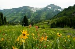 A neve tampou as montanhas um vale dos wildflowers. Imagem de Stock Royalty Free