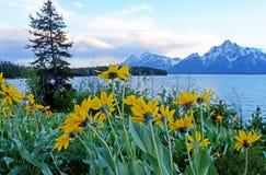 A neve tampou montanhas e os wildflowers cercam o lago Yellowstone Fotografia de Stock