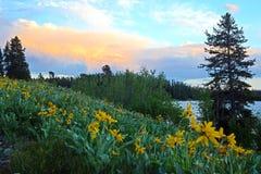 A neve tampou montanhas e os wildflowers cercam o lago Yellowstone Imagem de Stock Royalty Free