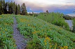 A neve tampou montanhas e os wildflowers cercam o lago Yellowstone Foto de Stock