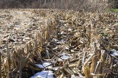 Neve in un campo di grano Immagini Stock