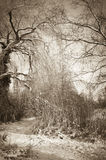 Neve in una foresta Fotografie Stock Libere da Diritti