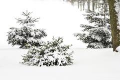 Neve in una sosta Immagini Stock Libere da Diritti