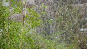 A neve vão e as varreduras da tempestade de neve sobre as árvores verdes em abril, o ciclone do norte vídeos de arquivo