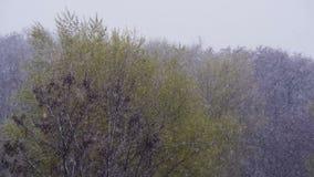 A neve vão e as varreduras da tempestade de neve sobre as árvores verdes em abril, o ciclone do norte video estoque