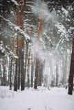 A neve vai para baixo do ramo na floresta Imagem de Stock