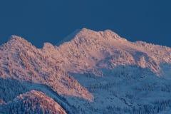 Neve viola Fotografie Stock Libere da Diritti