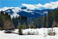 Neve Washington della sorgente di Hyak del supporto dell'insenatura dell'oro Immagini Stock Libere da Diritti