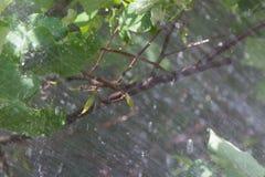 Nevel op de boom stock afbeelding