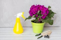 Nevelfles en bloeiende bloem tegen plantenziekten en ongedierte De spuitbus van de gebruikshand met pesticiden in de tuin royalty-vrije stock afbeelding