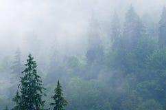 Nevelig berglandschap royalty-vrije stock foto's