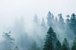 Nevelig berglandschap stock afbeeldingen
