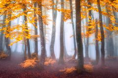 Nevelig bos in de herfst royalty-vrije stock afbeeldingen