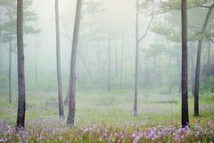 Nevelig bos met bloemen ter plaatse Stock Foto's