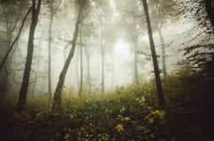 Nevelig bos met griezelige atmosfeer in de herfst stock foto