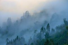 Nevelig bos op de berghelling in een natuurreservaat Royalty-vrije Stock Afbeelding