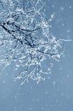 Nevelig de winterbeeld royalty-vrije stock fotografie