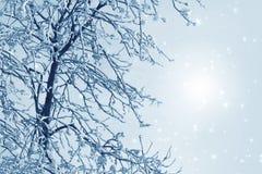 Nevelig de winterbeeld stock afbeelding