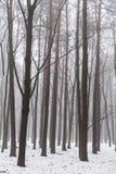 Nevelig de winterhout bij ochtend Stock Afbeelding
